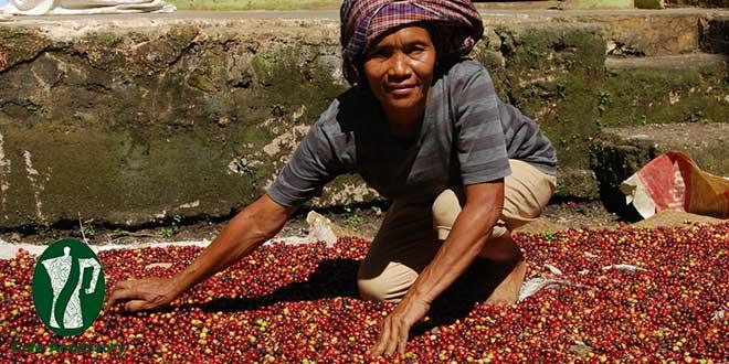 زنان در قهوه